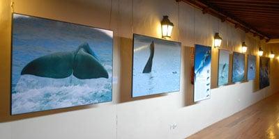 ballenas-12-5-08.jpg