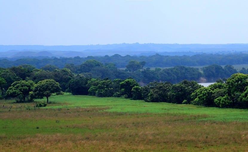 Llanos orientales de Colombia