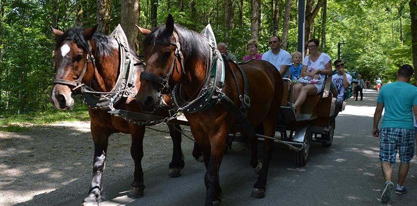 carruaje tirado por caballos rumbo castillo Neuschwanstein
