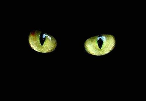 gato-negro-2