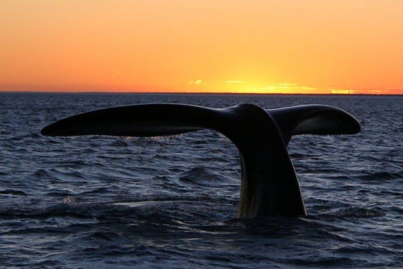 La Gran Ruta Oceánica con una ballena