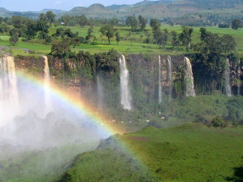 La Selva del Nilo