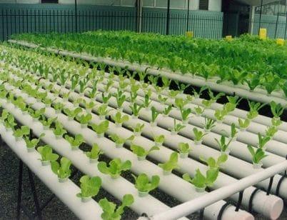 los-cultivos-de-egipto-2