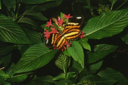 Miami Butterfly World, la casa de mariposas más grande de los Estados Unidos