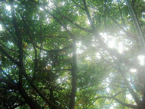 El Parque Forestal los Tres Jardines estará acabado para la primavera de 2010