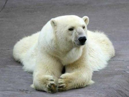 el-peligro-de-los-osos-en-noruega
