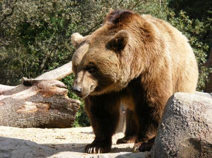 el-peligro-de-los-osos-en-noruega2