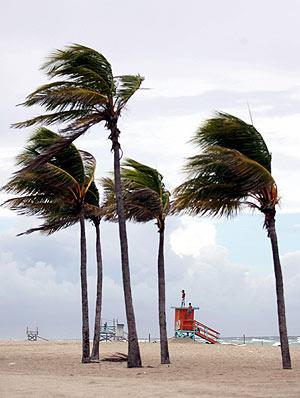 Las palmeras de Miami