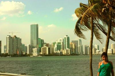 Las palmeras de Miami2