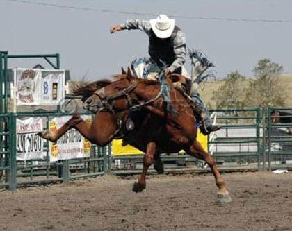 Rodeo con caballo salvaje