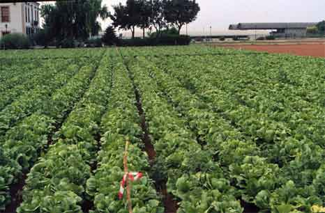 agricultura2