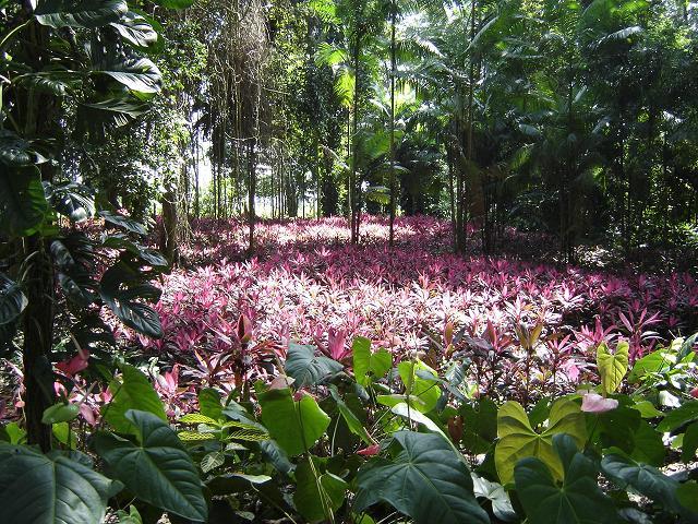 Flora_Tropical