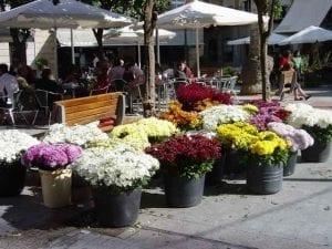 Flores-Fiesta--Todos-Los-Sa