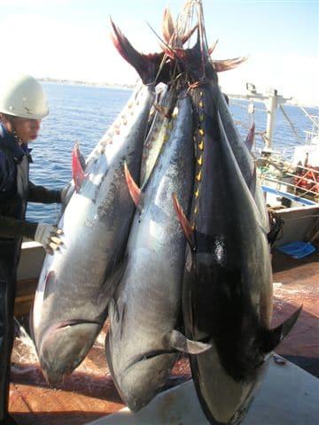 Pesca en el Nilo