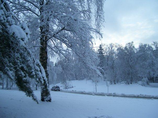 Te recuerdo invierno taringa for Imagenes de patios de invierno