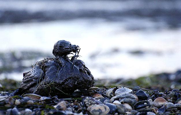 Contaminación Ambiental Petrolera :(