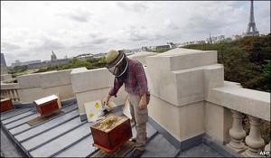 1.1.13 300x175 La apicultura de moda en Paris