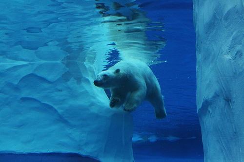 Bio Garden/ Paisajes y Fauna Polar Increible - cover