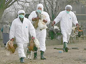 gripe aviar en venezuela