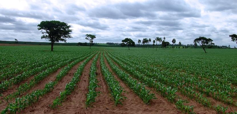 Campo cultivado en Venezuela