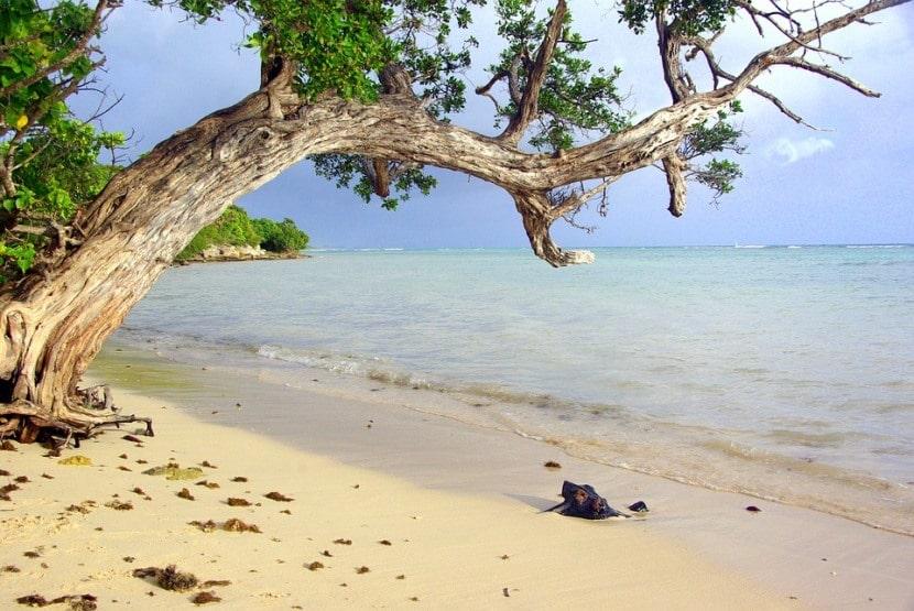 Playa de guadalupe
