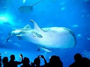 Conozca el acuario de vancouver for Acuarios zona norte