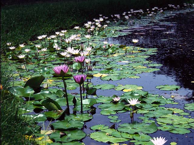 Vista del Parque de la Exotica Flora Tropical
