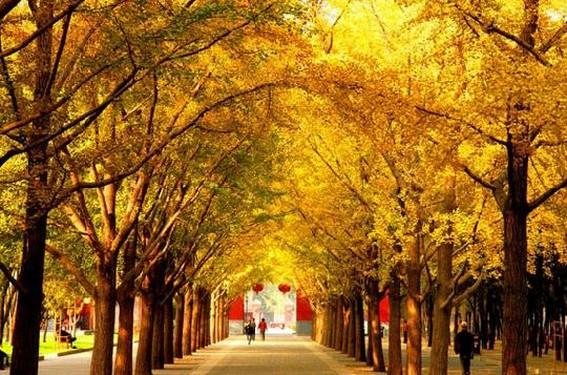 Beijing en otoño