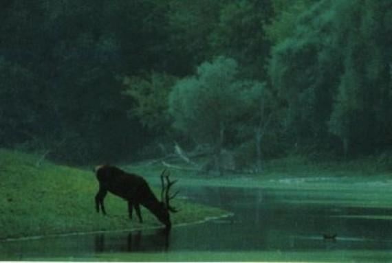 Parque Nacional Duna Drava