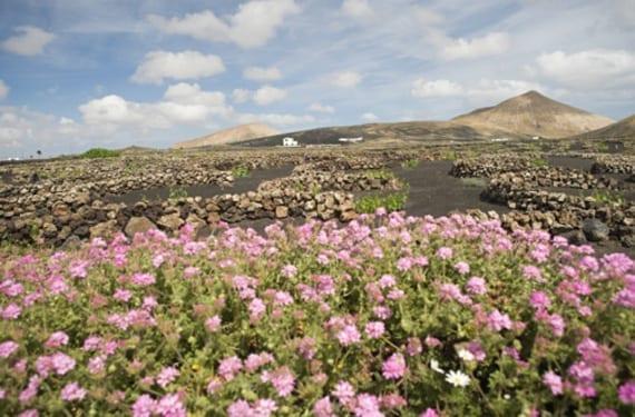La Geria de Lanzarote