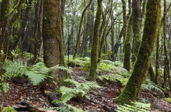 Bosques de La Gomera