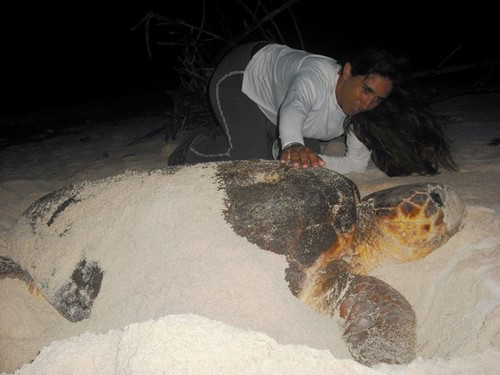 tortugas marinas en Cuba