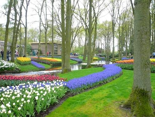Tour a los Jardines Keukenhof