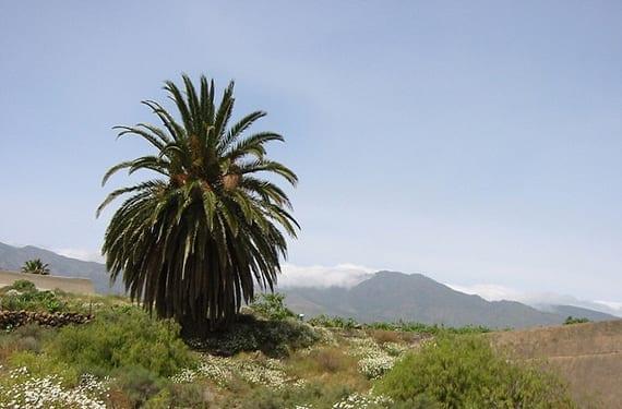 Paisaje de Tenerife