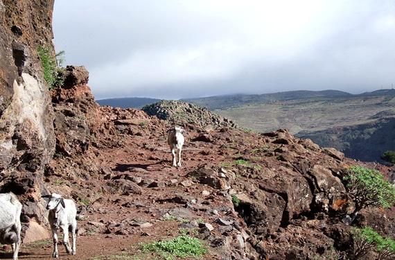 Montañas de Canarias