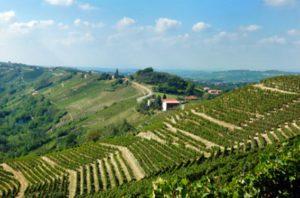 Vinos de Verona