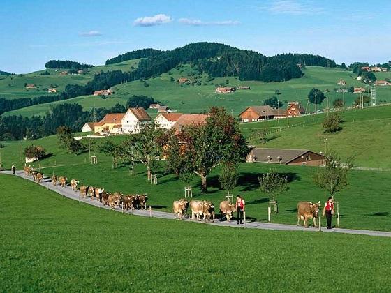 Turismo Suiza6 Rutas turísticas en Suiza : Zúrich y Appenzell