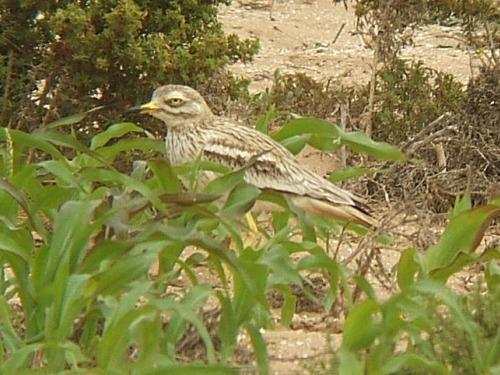 Aves en Marruecos