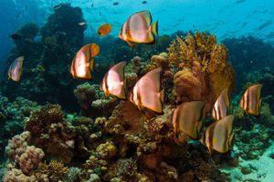 Arrecife del Mar de Andaman