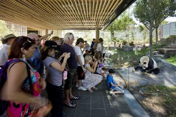 Pandas en Australia