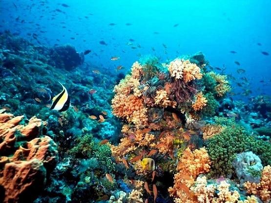 Arrecife-de-coral Venezuela
