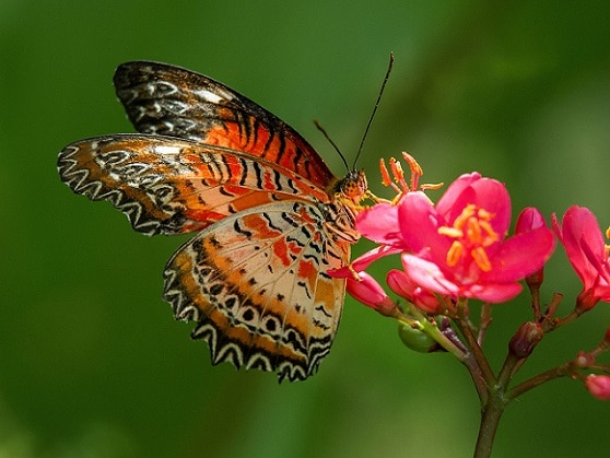 Es un jardín botánico con extensas colecciones de plantas de todo el mundo