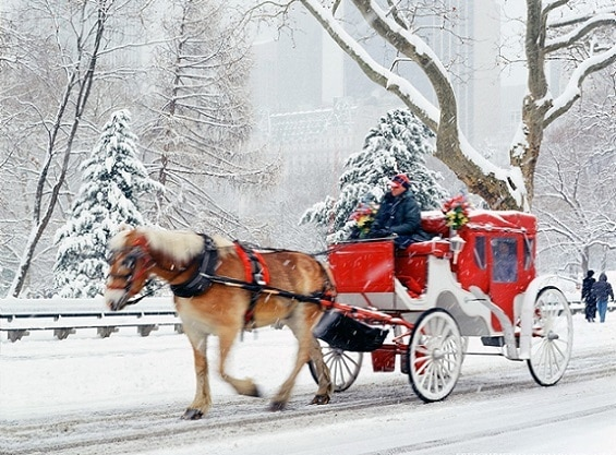 Tradicionales paseos en coche en el Parque Central de Nueva York