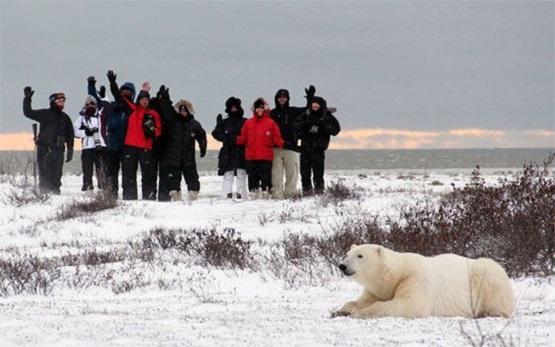 Osos polares en la bahía de Hudson, Churchill