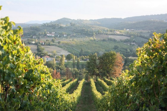 Ruta del Vino Sagrantino