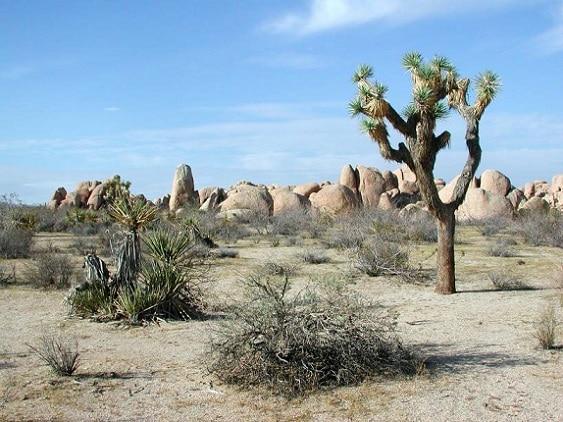 El parque se extiende por 3 196 km² donde la flora y fauna es increíble