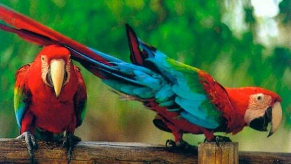 fauna venezolana