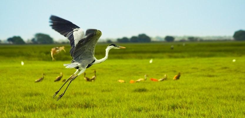 Los Llanos, extensas sabanas donde abunda una fauna abundante