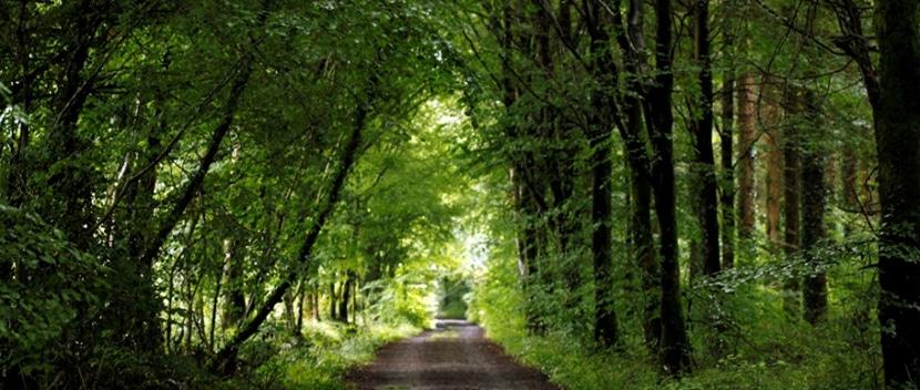 bosques-de-irlanda