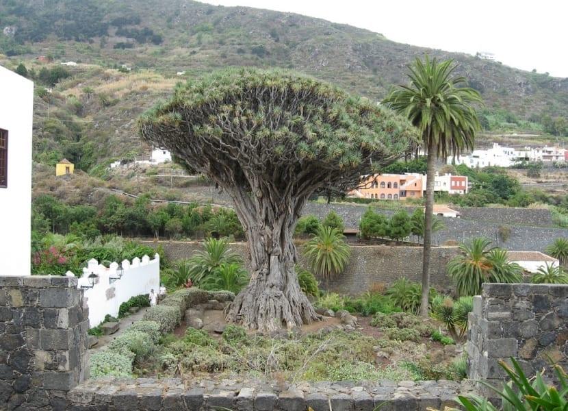 El jard n de las hesp rides y el drago milenario for Jardin hesperides